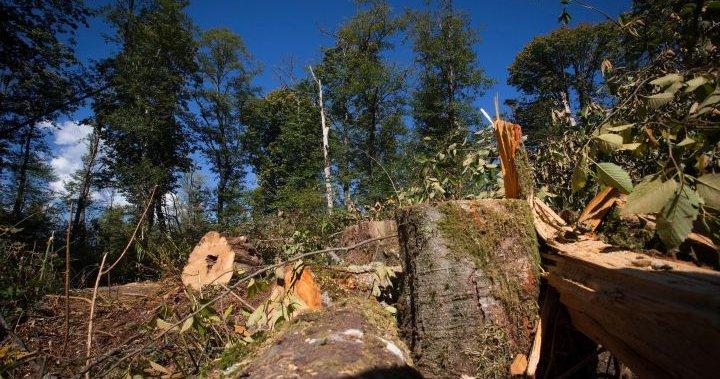 De Canadese energieregulator Trans Mountain heeft opdracht gegeven de werkzaamheden aan het project voor het opruimen van bomen stop te zetten